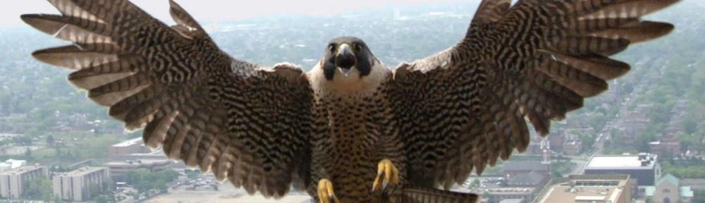 hat price maltese falcon malta