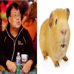 poker players that look like animals